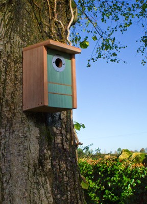 Triple Action Bird House