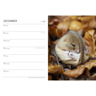 Royal Horticultural Society Wild in the Garden Diary 2020 (Diary)
