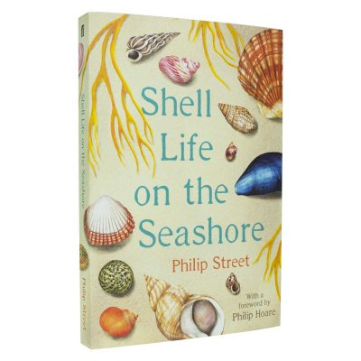 Shell Life on the Seashore (Paperback)