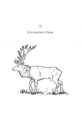 London Parks (Hardback)