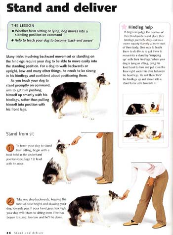 Dog Tricks: Fun and Games for Your Clever Canine (Paperback)