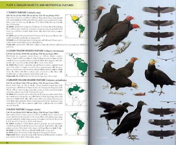 Raptors of the World: A Field Guide - Helm Field Guides (Paperback)