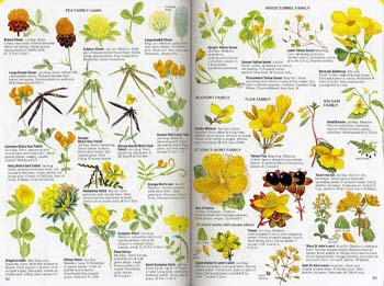 Wild Flowers by Colour: The Easy Way to Flower Identification (Paperback)