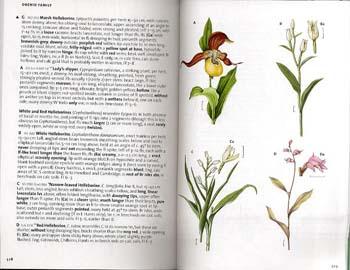 The Wild Flower Key Paperback