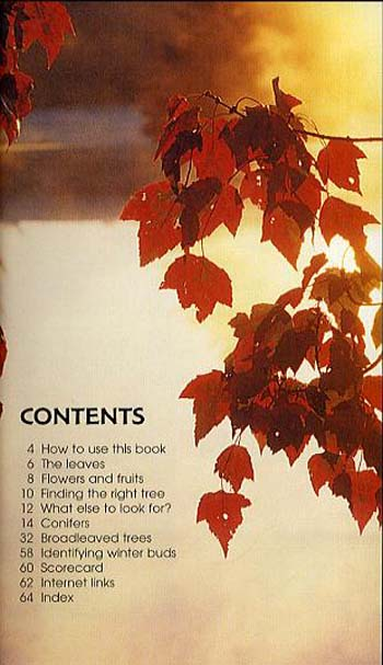 Trees - Spotter's Guide (Paperback)
