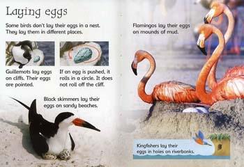 Eggs and Chicks - Beginners Series (Hardback)