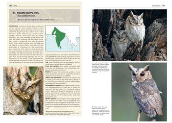 Owls of the World: A Photographic Guide - Helm Photographic Guides (Hardback)