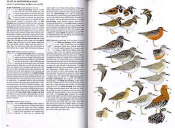 A Field Guide to the Birds of Thailand (Hardback)