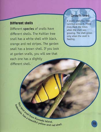 Snails Up Close - Raintree Perspectives: Minibeasts Up Close (Paperback)