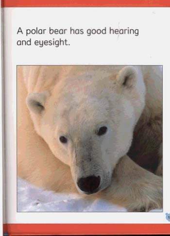 WILD ANIMALS POLAR BEAR (Hardback)