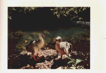 The Dodo and Mauritius Island: Imaginary Encounters (Hardback)