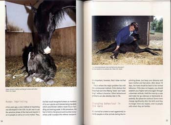 Your First Foal: Horse Breeding for Beginners (Hardback)