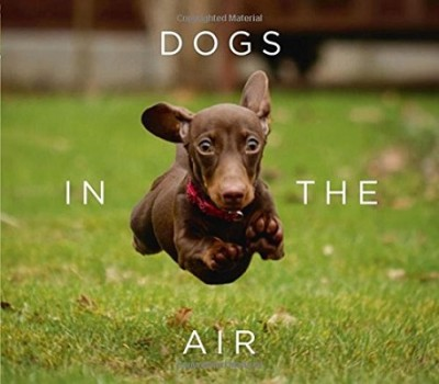 Dogs in the Air (Hardback)
