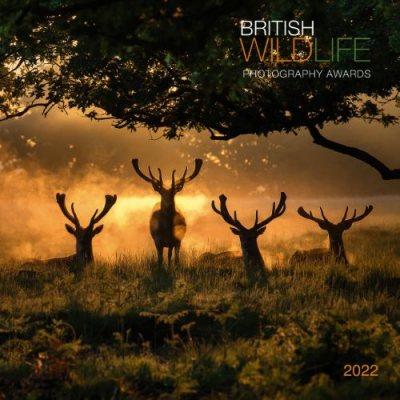 2022 British Wildlife Wall Calendar (Calendar)
