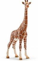 Giraffe, Female