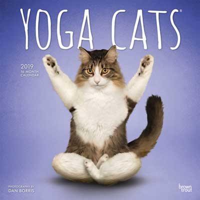 Yoga Cats 2019 Square Wall Calendar