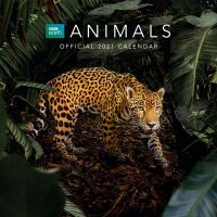 BBC Earth Animals 2021 Calendar - Official Square Wall Format Calendar