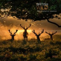 2022 British Wildlife Wall Calendar