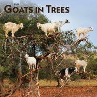 2021 Goats In Trees Wall Calendar