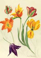 Watercolour Tulips