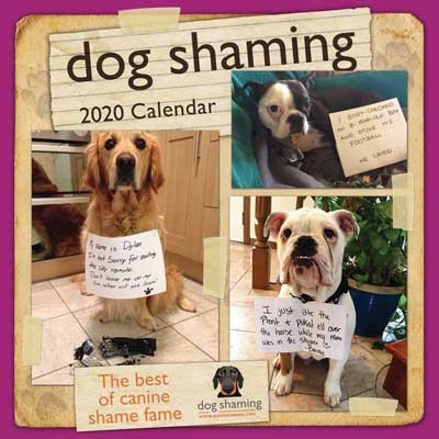 Dog Shaming 2020 Square Wall Calendar (Calendar)
